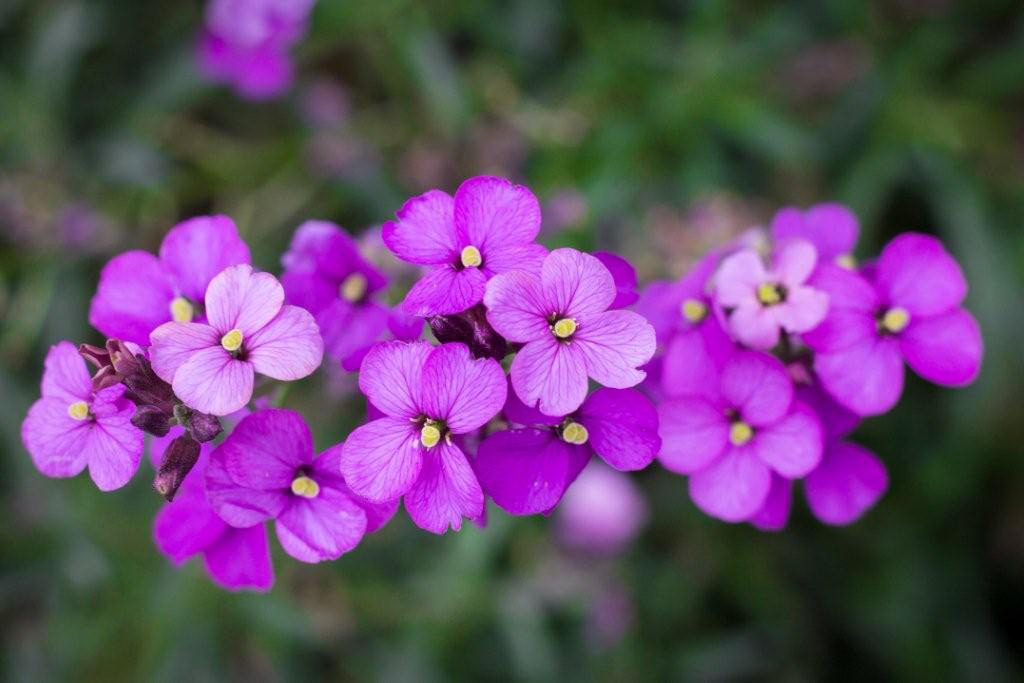 Purple flowers photo