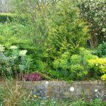 garden07-before-02