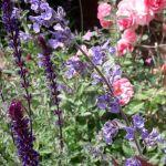 planting-gallery-07